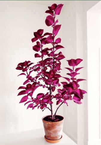 Piante da interni con foglie ruvide