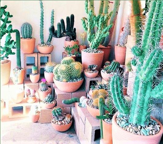 piante grasse da balconcino