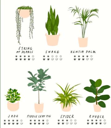 Selezione di piante da interni