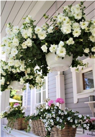 piante sospese e cesti di fiori in balcone