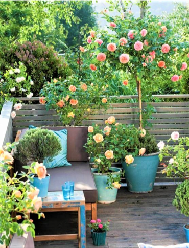 Rose sul balcone