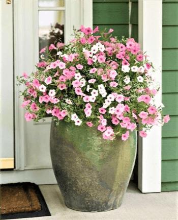 vaso di petunie