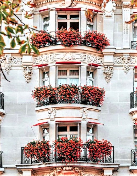 gruppo di finestre con fiori rossi