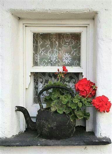 teiera in ferro con all'interno gerani rossi