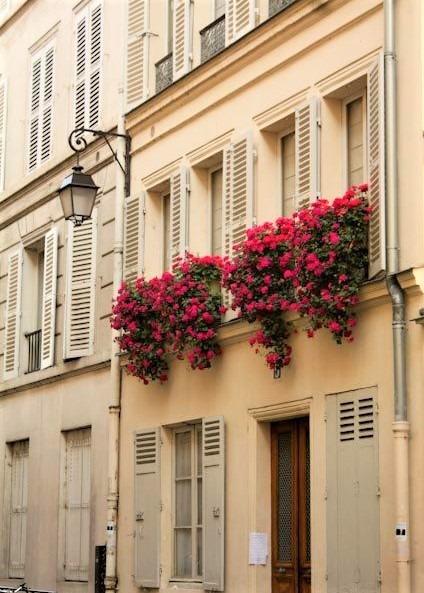 piccoli gruppi di piante su finestra a parigi