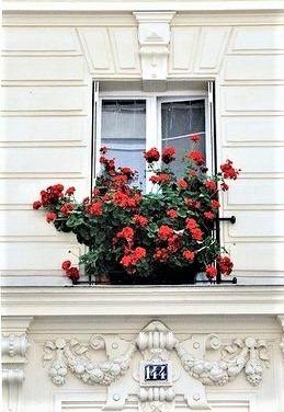 fiori rossi su vaso parigino