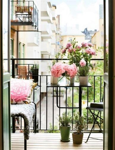 piccole piantine di gerano parigino sul balcone