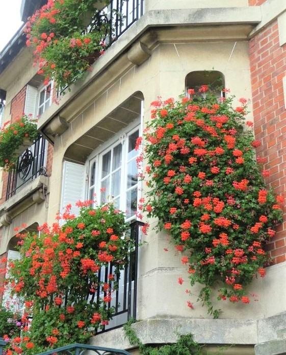 grandi gruppi di fiori rossi su finestra e balcone