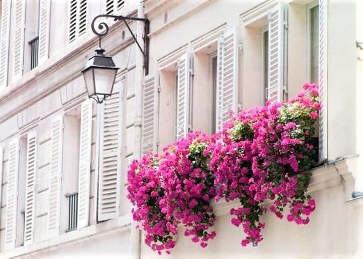 fiori a cascata su finestra e lampione in ferro