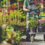 Piante per giardino: quali varietà scegliere