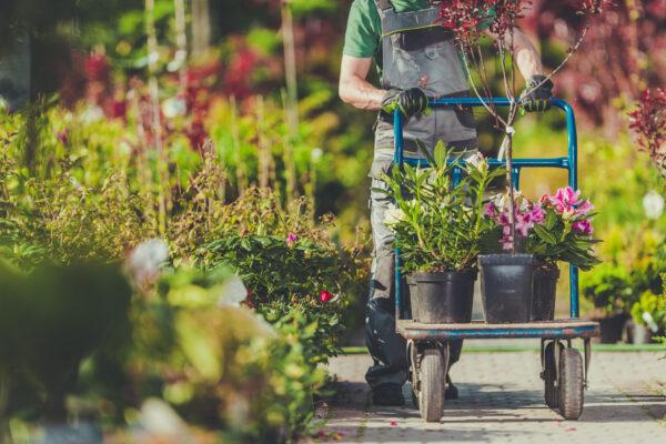 Piante da giardino: quali scegliere?